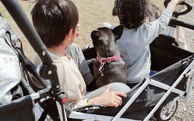 突然ですが・・犬を飼いました 犬飼い初心者がフレンチブルドッグを飼う
